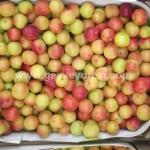 Geyve Meyve Meyvesi20