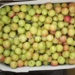 Geyve Meyve Meyvesi21