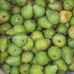Geyve Meyve Meyvesi22