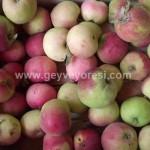 Geyve Meyve Meyvesi23