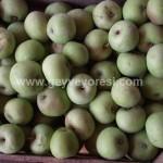 Geyve Meyve Meyvesi24