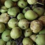 Geyve Meyve Meyvesi25