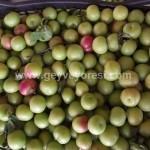Geyve Meyve Meyvesi29