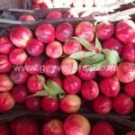 Geyve Meyve Meyvesi30