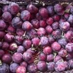 Geyve Meyve Meyvesi32