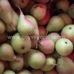 Geyve Meyve Meyvesi33