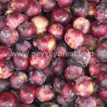 Geyve Meyve Meyvesi36