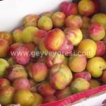 Geyve Meyve Meyvesi38