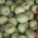 Geyve Meyve Meyvesi40