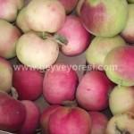 Geyve Meyve Meyvesi41