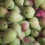 Geyve Meyve Meyvesi42