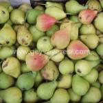 Geyve Meyve Meyvesi5