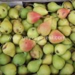 Geyve Meyve Meyvesi6