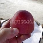 Geyve Elma 19