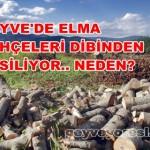 Geyve Elma 7