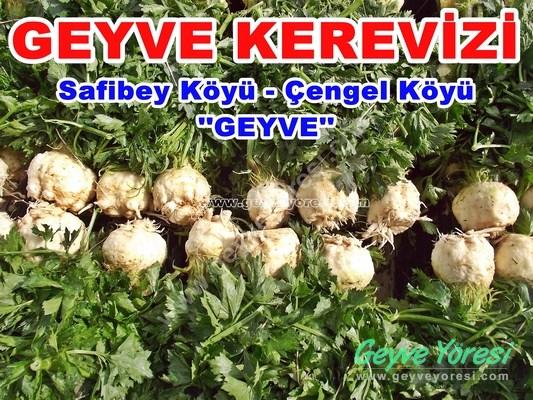 Geyve Kerevizi ( Safibey Köyü Ve Çengel Köyü )
