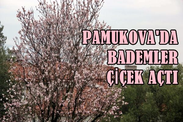 Pamukova'da Bademler Çiçek Açtı