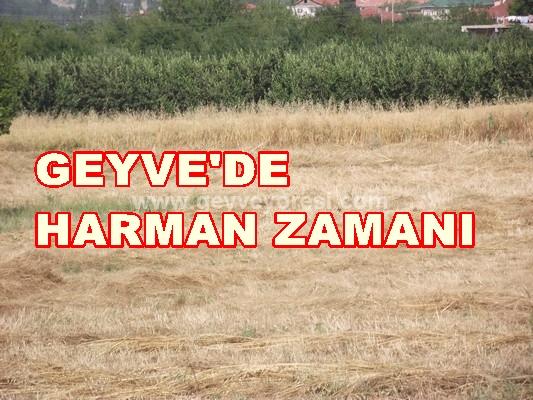 Geyve'de Harman Zaman Arpa Buğday Hasadı Yapılıyor