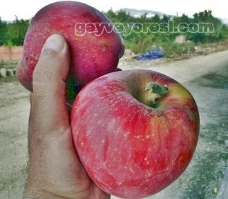 Geyve Elma 30