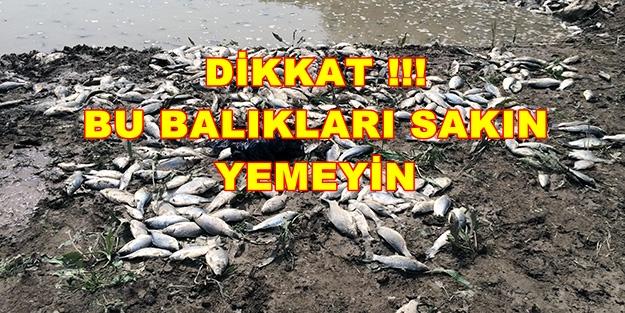 Pamukova Mekece Köyünde Ölen Balıkları Yemeyiniz
